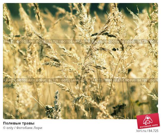 Купить «Полевые травы», фото № 84725, снято 23 октября 2005 г. (c) only / Фотобанк Лори