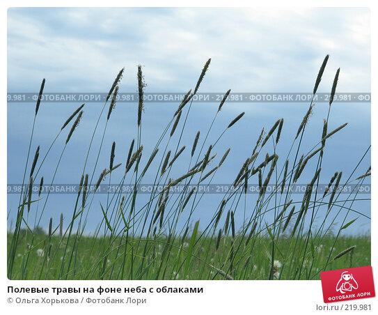 Купить «Полевые травы на фоне неба с облаками», фото № 219981, снято 11 июня 2007 г. (c) Ольга Хорькова / Фотобанк Лори