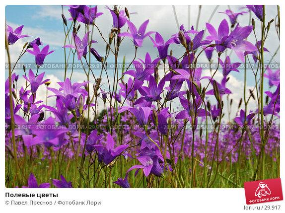 Полевые цветы, фото № 29917, снято 17 июня 2006 г. (c) Павел Преснов / Фотобанк Лори