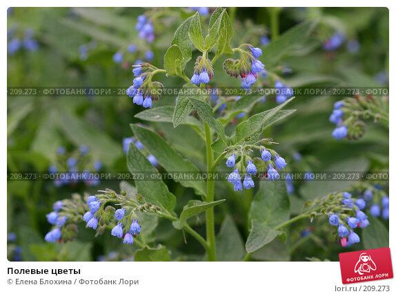 Полевые цветы, фото № 209273, снято 27 мая 2007 г. (c) Елена Блохина / Фотобанк Лори