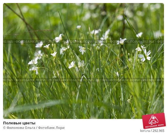 Полевые цветы, фото № 292965, снято 17 мая 2008 г. (c) Филонова Ольга / Фотобанк Лори