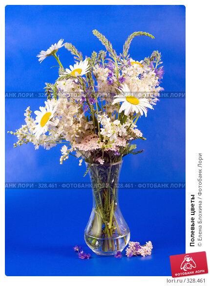 Полевые цветы, фото № 328461, снято 15 июня 2008 г. (c) Елена Блохина / Фотобанк Лори