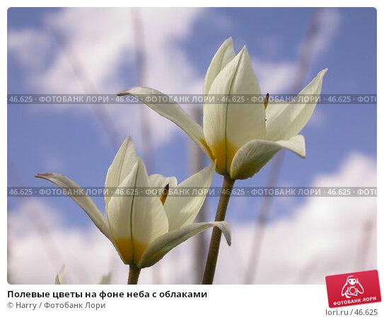 Купить «Полевые цветы на фоне неба с облаками», фото № 46625, снято 12 мая 2007 г. (c) Harry / Фотобанк Лори