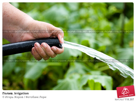 Купить «Полив. Irrigation», фото № 118397, снято 5 августа 2007 г. (c) Игорь Жоров / Фотобанк Лори