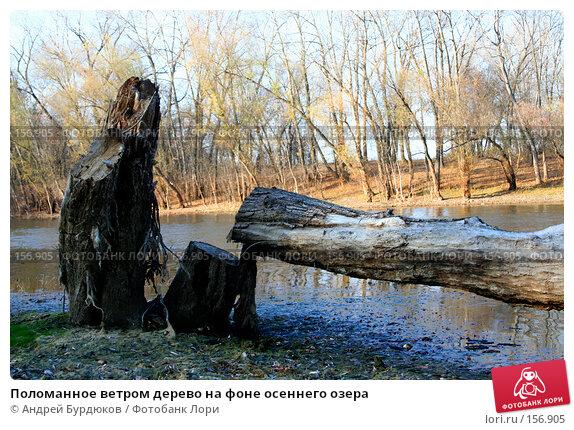 Купить «Поломанное ветром дерево на фоне осеннего озера», фото № 156905, снято 4 ноября 2005 г. (c) Андрей Бурдюков / Фотобанк Лори
