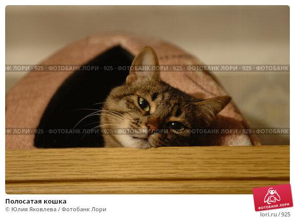 Купить «Полосатая кошка», фото № 925, снято 15 февраля 2006 г. (c) Юлия Яковлева / Фотобанк Лори