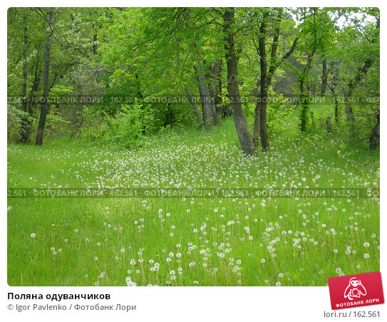 Поляна одуванчиков, фото № 162561, снято 14 мая 2006 г. (c) Igor Pavlenko / Фотобанк Лори