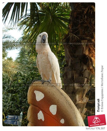 Попугай, фото № 176397, снято 18 марта 2007 г. (c) Елена Гордеева / Фотобанк Лори