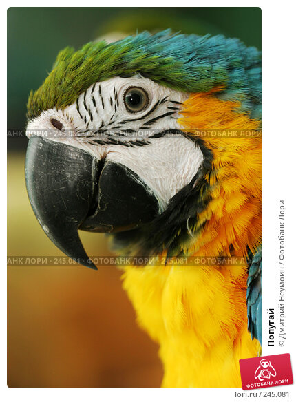 Попугай, эксклюзивное фото № 245081, снято 15 мая 2005 г. (c) Дмитрий Неумоин / Фотобанк Лори