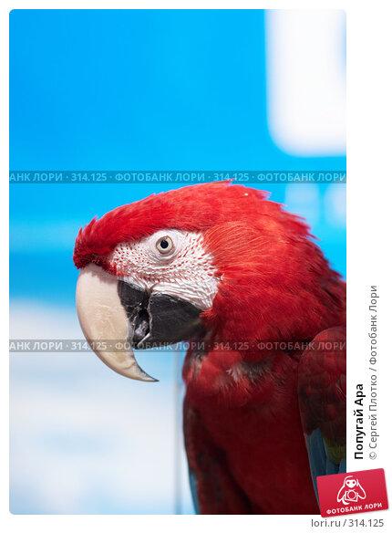 Попугай Ара, фото № 314125, снято 12 апреля 2008 г. (c) Сергей Плотко / Фотобанк Лори