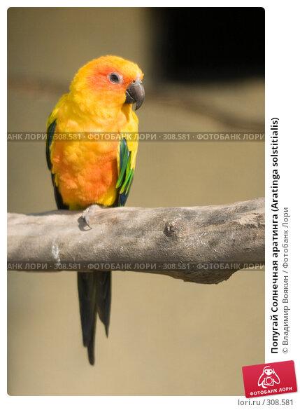 Попугай Солнечная аратинга (Aratinga solstitialis), фото № 308581, снято 17 мая 2008 г. (c) Владимир Воякин / Фотобанк Лори