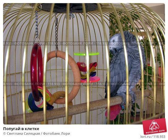 Попугай в клетке, фото № 118933, снято 8 августа 2007 г. (c) Светлана Силецкая / Фотобанк Лори