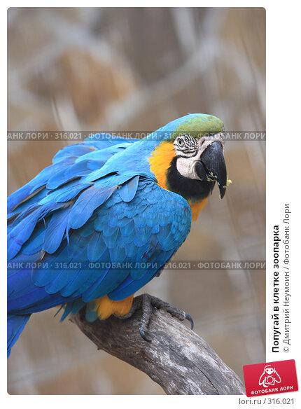 Попугай в клетке зоопарка, эксклюзивное фото № 316021, снято 28 апреля 2008 г. (c) Дмитрий Неумоин / Фотобанк Лори