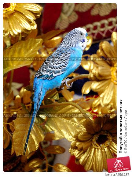 Попугай в золотых ветках, фото № 256237, снято 19 апреля 2008 г. (c) RedTC / Фотобанк Лори