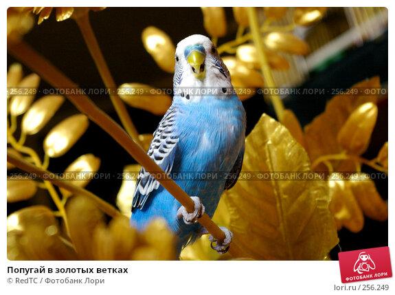 Купить «Попугай в золотых ветках», фото № 256249, снято 19 апреля 2008 г. (c) RedTC / Фотобанк Лори