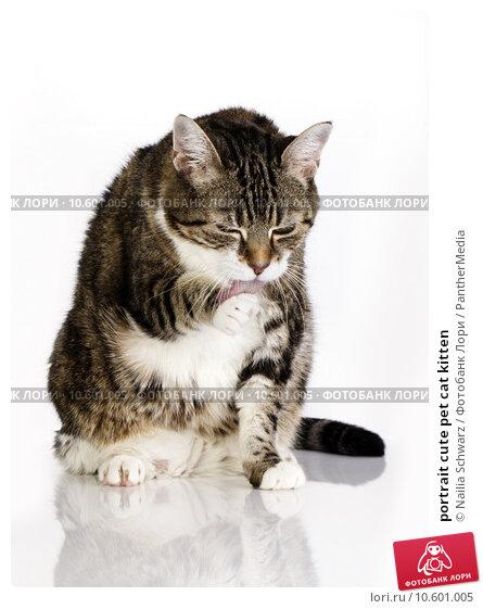 portrait cute pet cat kitten. Стоковое фото, фотограф Nailia Schwarz / PantherMedia / Фотобанк Лори