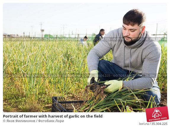 Portrait of farmer with harvest of garlic on the field. Стоковое фото, фотограф Яков Филимонов / Фотобанк Лори