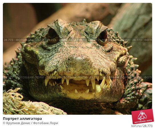 Купить «Портрет аллигатора», фото № 28773, снято 16 декабря 2006 г. (c) Крупнов Денис / Фотобанк Лори