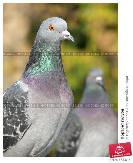 Купить «Портрет голубя», фото № 83813, снято 2 октября 2006 г. (c) Надежда Болотина / Фотобанк Лори