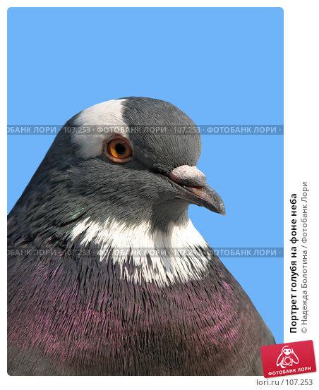 Портрет голубя на фоне неба, фото № 107253, снято 2 октября 2006 г. (c) Надежда Болотина / Фотобанк Лори