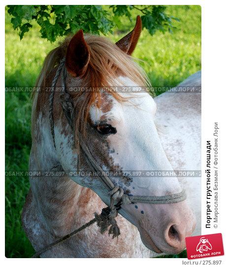 Портрет грустной лошади, фото № 275897, снято 21 мая 2007 г. (c) Мирослава Безман / Фотобанк Лори