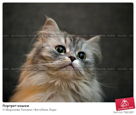 Портрет кошки, фото № 162601, снято 7 февраля 2004 г. (c) Морозова Татьяна / Фотобанк Лори