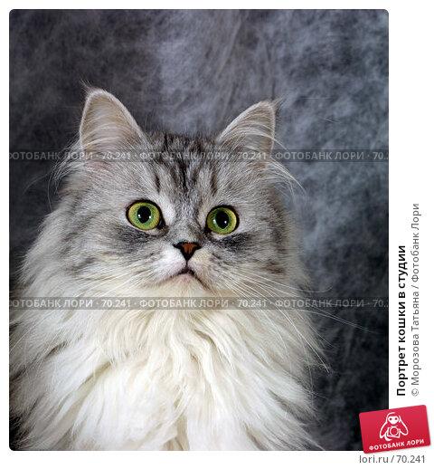 Портрет кошки в студии, фото № 70241, снято 19 декабря 2004 г. (c) Морозова Татьяна / Фотобанк Лори