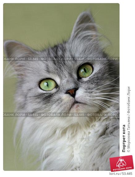 Портрет кота, фото № 53445, снято 9 сентября 2005 г. (c) Морозова Татьяна / Фотобанк Лори