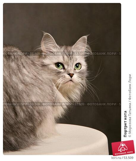 Портрет кота, фото № 53509, снято 7 июня 2007 г. (c) Морозова Татьяна / Фотобанк Лори