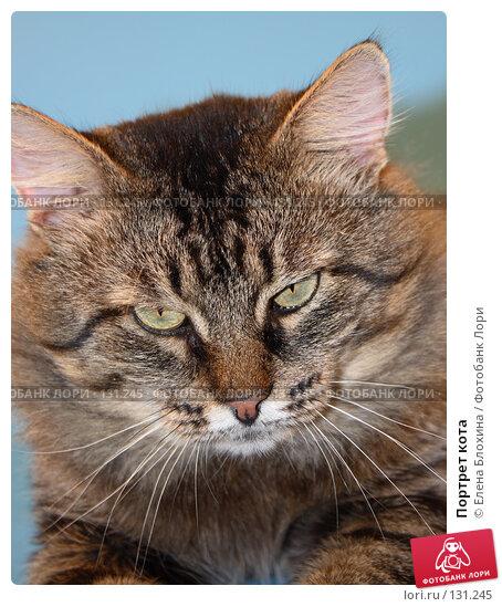 Портрет кота, фото № 131245, снято 28 ноября 2007 г. (c) Елена Блохина / Фотобанк Лори