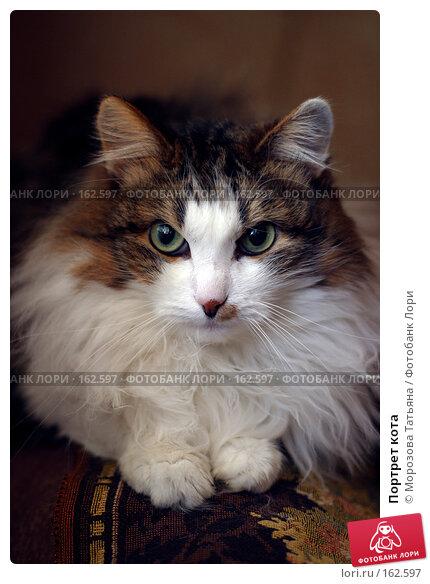 Портрет кота, фото № 162597, снято 9 марта 2006 г. (c) Морозова Татьяна / Фотобанк Лори