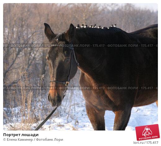 Портрет лошади, фото № 175417, снято 7 января 2008 г. (c) Елена Каминер / Фотобанк Лори