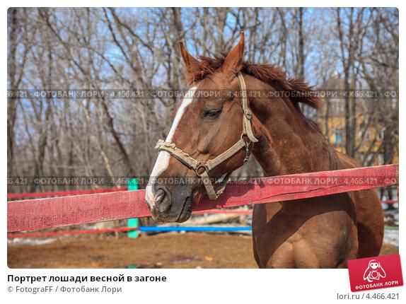 Купить «Портрет лошади весной в загоне», фото № 4466421, снято 21 марта 2019 г. (c) FotograFF / Фотобанк Лори