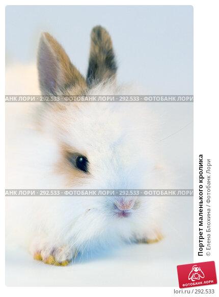 Портрет маленького кролика, фото № 292533, снято 20 мая 2008 г. (c) Елена Блохина / Фотобанк Лори