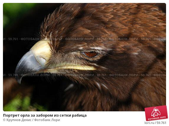 Портрет орла за забором из сетки рабица, фото № 59761, снято 11 мая 2007 г. (c) Крупнов Денис / Фотобанк Лори