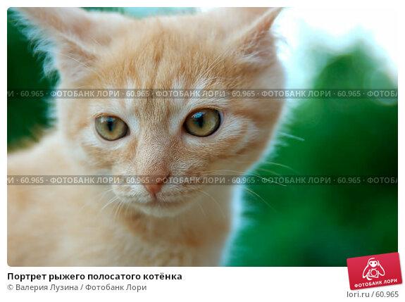 Купить «Портрет рыжего полосатого котёнка», фото № 60965, снято 8 июля 2007 г. (c) Валерия Потапова / Фотобанк Лори