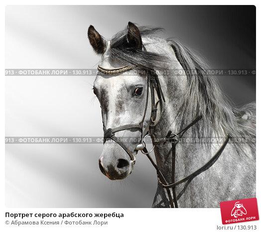 Портрет серого арабского жеребца, фото № 130913, снято 9 июня 2007 г. (c) Абрамова Ксения / Фотобанк Лори