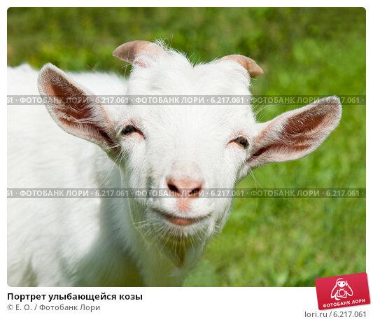 Купить «Портрет улыбающейся козы», фото № 6217061, снято 26 июля 2014 г. (c) Екатерина Овсянникова / Фотобанк Лори