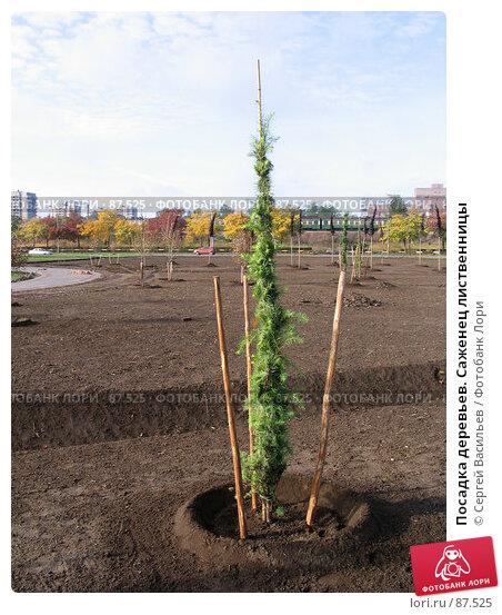 Посадка деревьев. Саженец лиственницы, фото № 87525, снято 23 сентября 2007 г. (c) Сергей Васильев / Фотобанк Лори