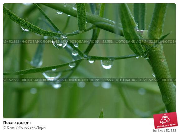Купить «После дождя», фото № 52553, снято 25 апреля 2018 г. (c) Олег / Фотобанк Лори