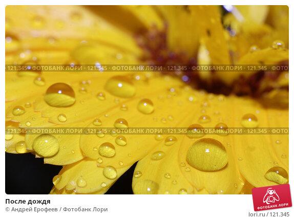 Купить «После дождя», фото № 121345, снято 3 августа 2007 г. (c) Андрей Ерофеев / Фотобанк Лори
