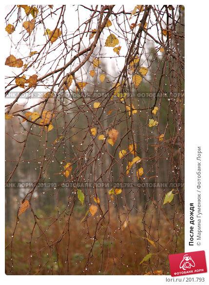 После дождя, фото № 201793, снято 7 октября 2006 г. (c) Марина Гуменюк / Фотобанк Лори