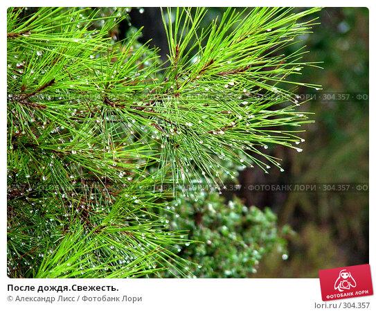 После дождя.Свежесть., фото № 304357, снято 16 сентября 2005 г. (c) Александр Лисс / Фотобанк Лори