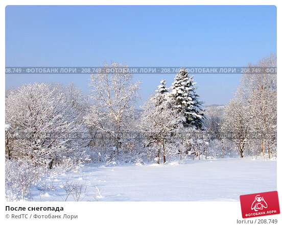 После снегопада, фото № 208749, снято 18 декабря 2007 г. (c) RedTC / Фотобанк Лори