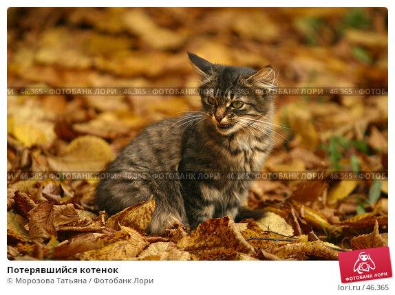 Купить «Потерявшийся котенок», фото № 46365, снято 30 сентября 2006 г. (c) Морозова Татьяна / Фотобанк Лори