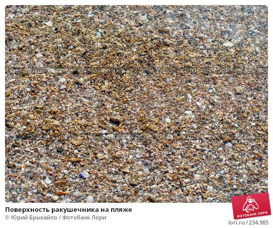 Поверхность ракушечника на пляже, фото № 234985, снято 12 июня 2007 г. (c) Юрий Брыкайло / Фотобанк Лори