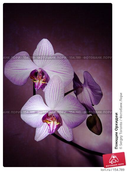 Поющие Орхидеи, фото № 154789, снято 19 декабря 2007 г. (c) Sergey Toronto / Фотобанк Лори