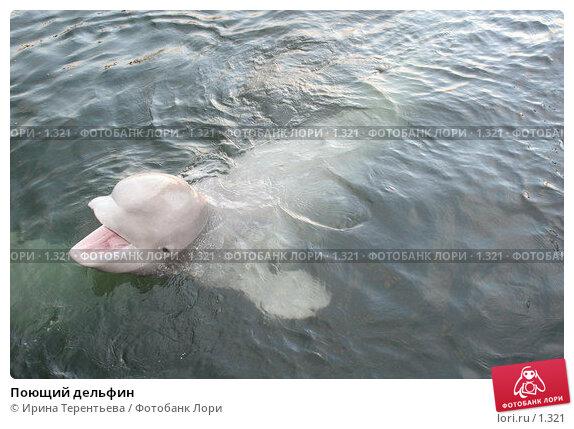Поющий дельфин, эксклюзивное фото № 1321, снято 15 сентября 2005 г. (c) Ирина Терентьева / Фотобанк Лори
