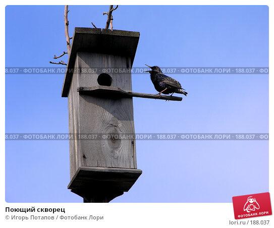 Купить «Поющий скворец», фото № 188037, снято 29 октября 2006 г. (c) Игорь Потапов / Фотобанк Лори