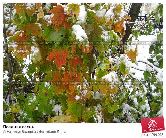 Поздняя осень, фото № 99093, снято 16 октября 2007 г. (c) Наталья Волкова / Фотобанк Лори